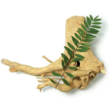 Корень эврикомы входит в состав вимакса